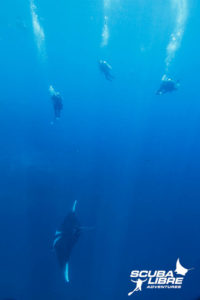 Manta and divers