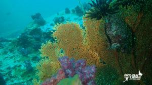 Untouched coral
