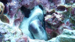 Shy octopuss